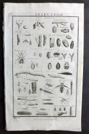 Howard 1796 Folio Print. Insects 65